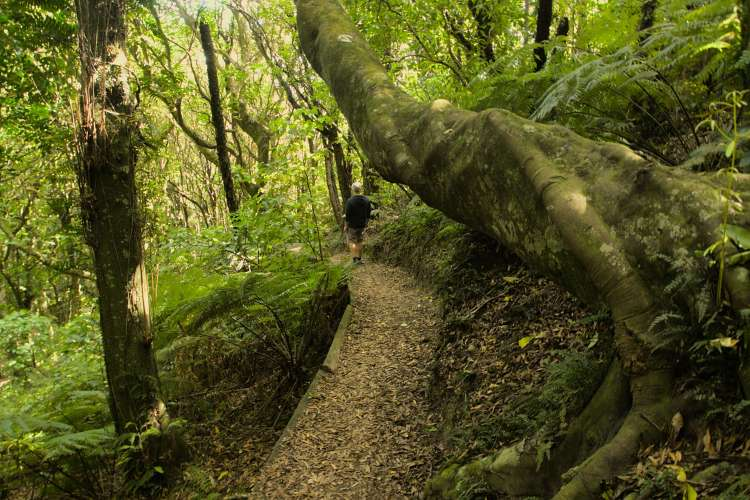 Wilf Mexted Reserve Track | Friends of Tawa Bush