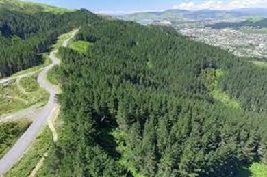 Forest of Tawa aerial view of Spicer Road | Friends of Tawa Bush Reserves