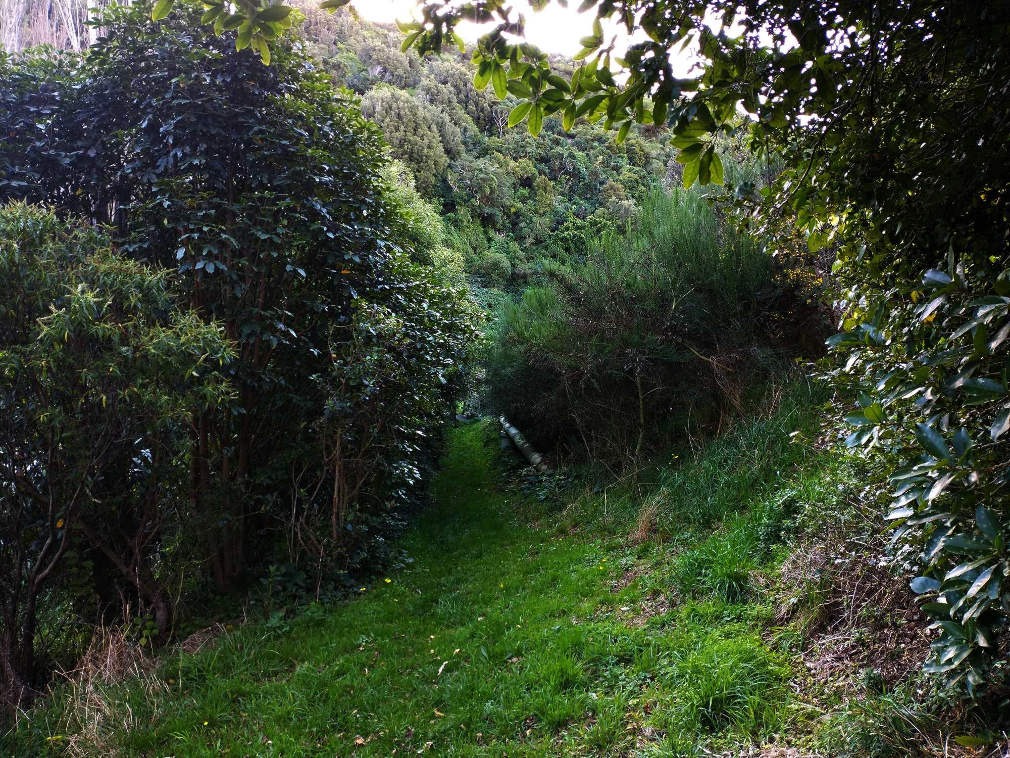 Woodburn Reserve path near beginning April 2021 | Friends of Tawa Bush