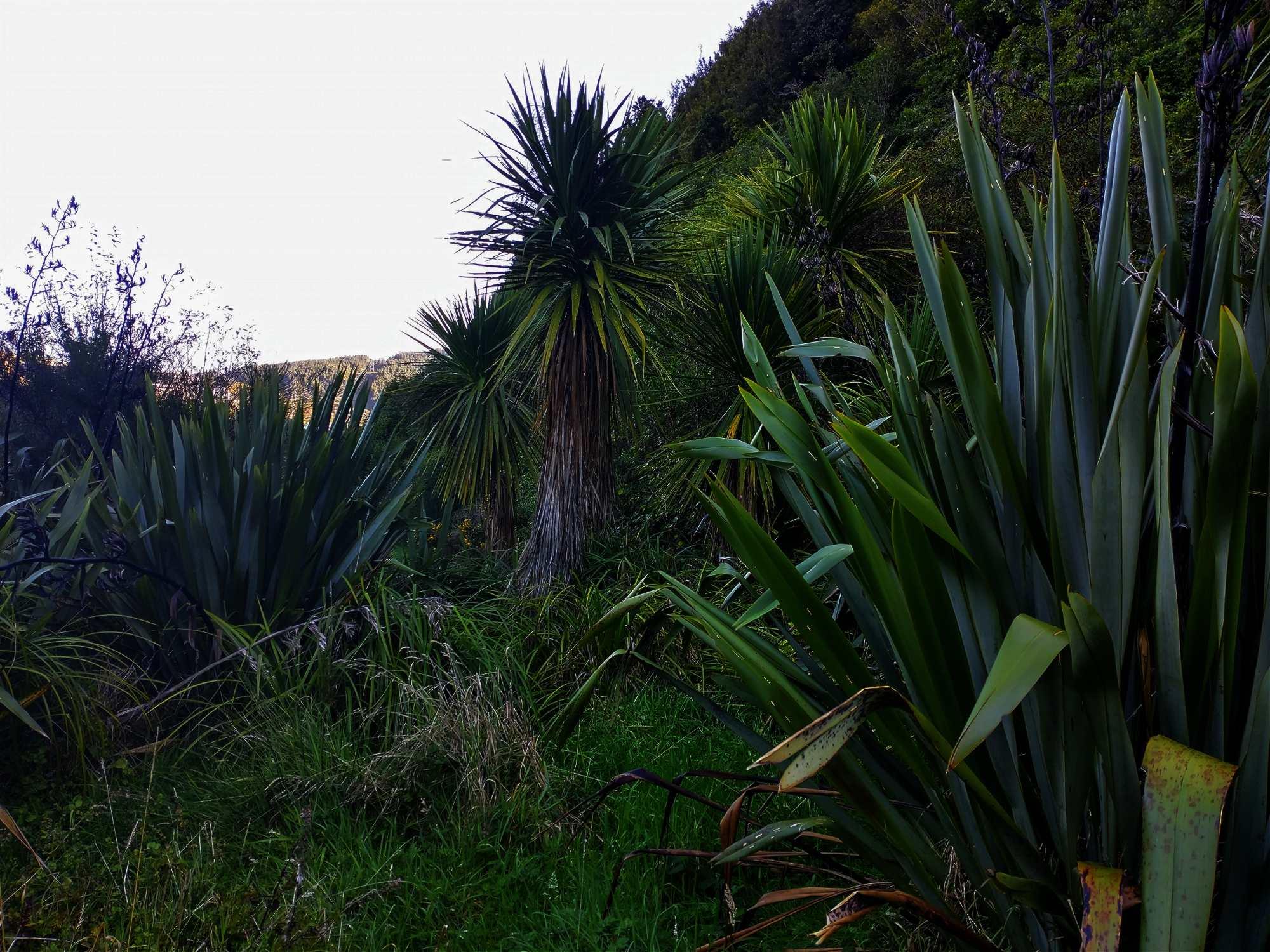 Woodburn Reserve Cabbage Trees and flax April 2021 | Friends of Tawa Bush