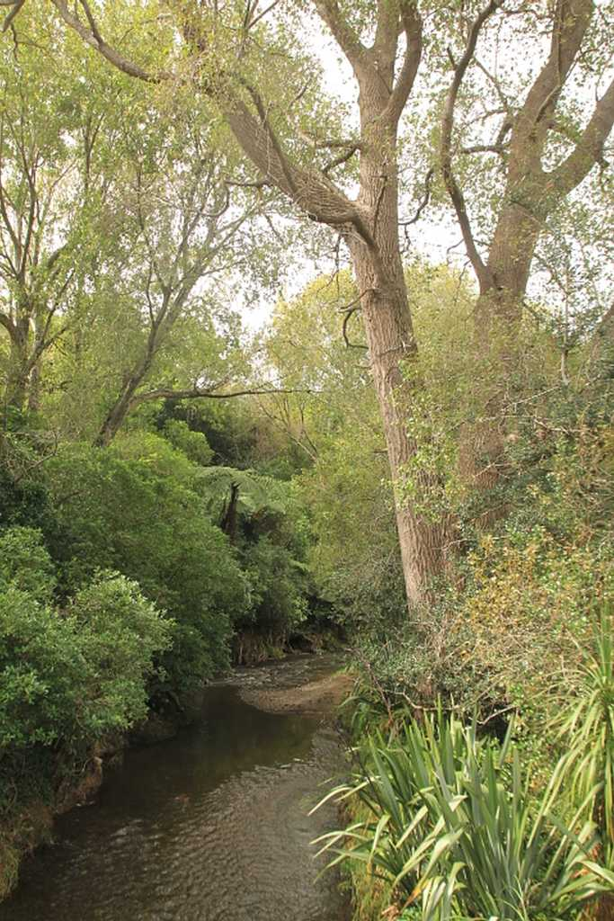 Porirua Stream, Willowbank Reserve