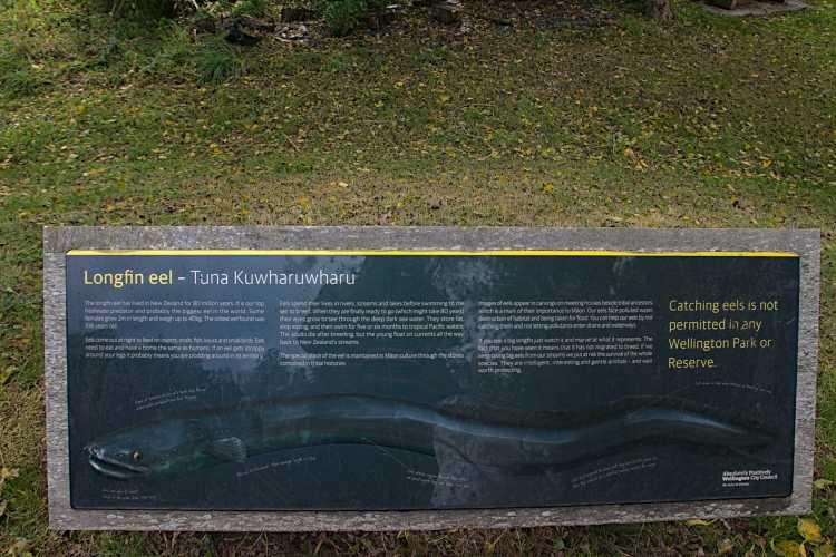 Longfin eel sign at Willowbank Reserve. Tuna Kuwharuwharu