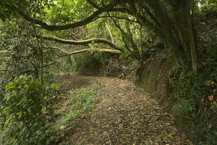 Willowbank Reserve walkway