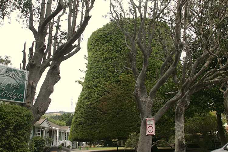 The Bucket Tree of the Bucket Tree Lodge