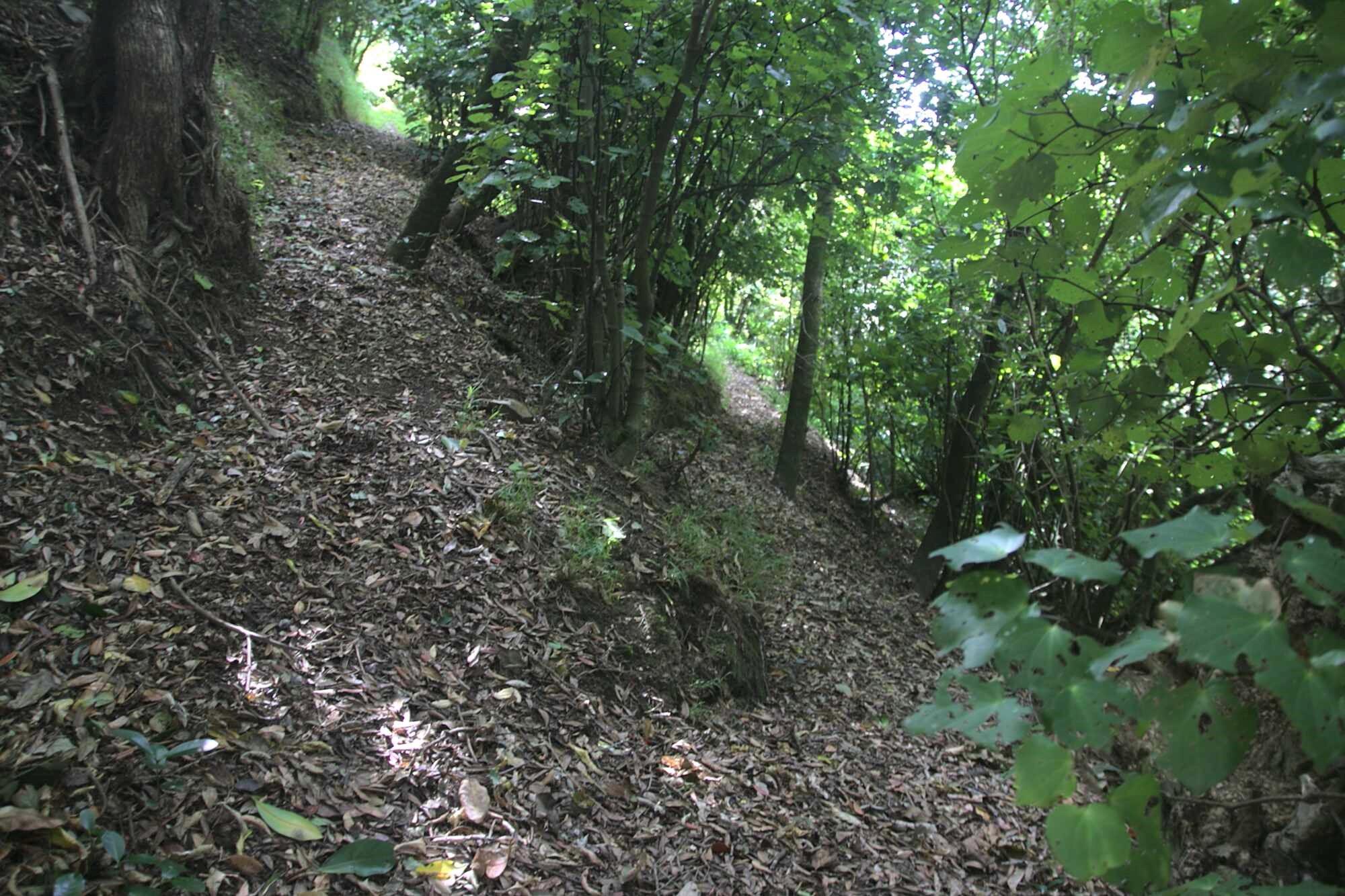 Charles Duncan Reserve loop path April 2021