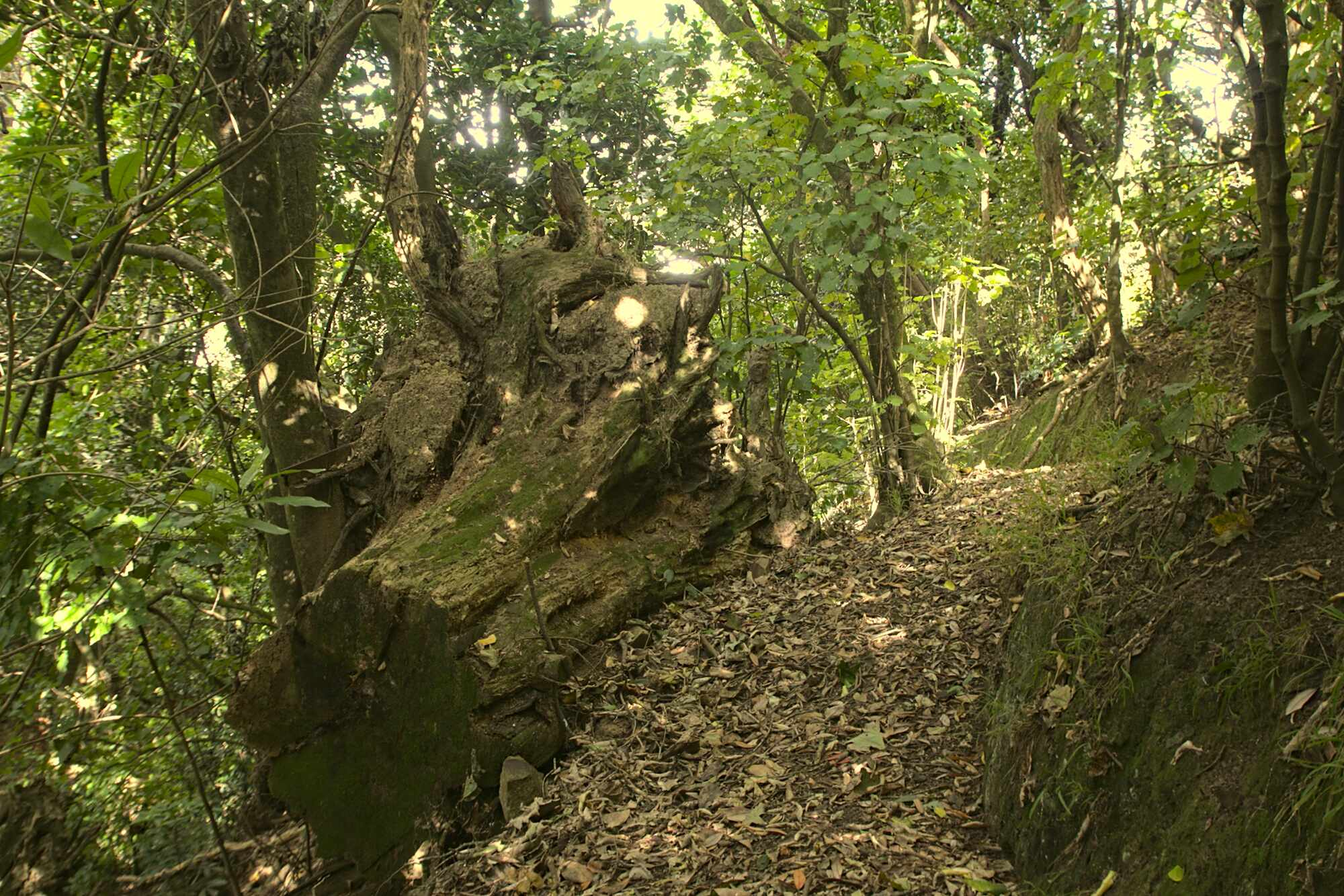 Charles Duncan Reserve tree stump