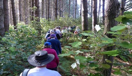 Forest of Tawa walking group