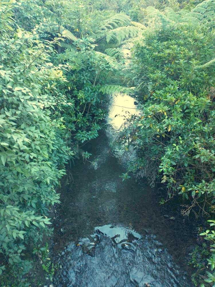 Takapu Stream Willowbank reserve