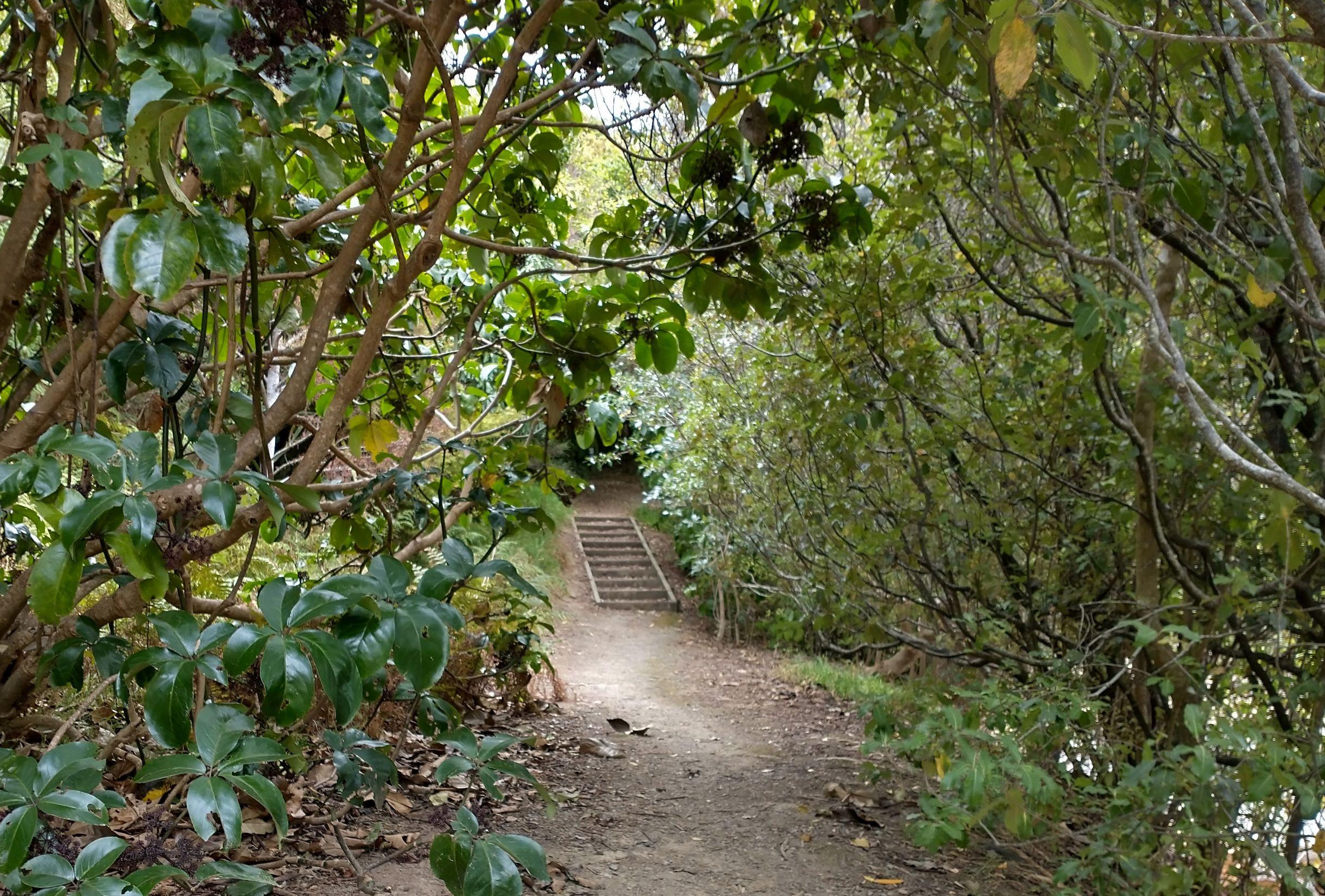 Redwood track 2021
