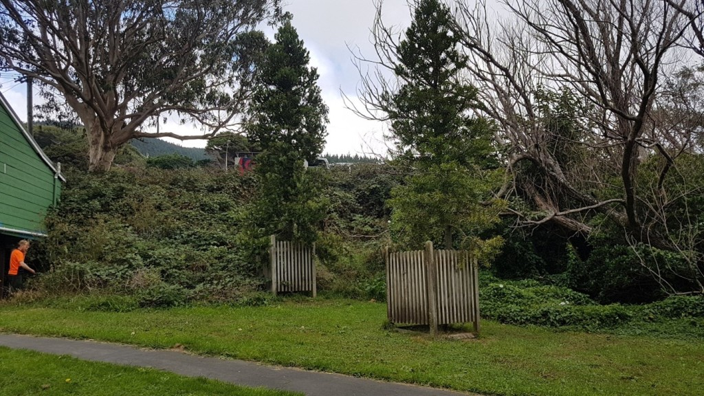 Willowbank Site prior to working-bee March 2019